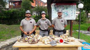 Ventasso: la forestale sequestra 17 chili di funghi tra Succiso e Miscoso