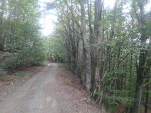 Al via il nuovo regolamento forestale regionale